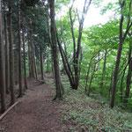 12:30 緩やかな杉林を歩く