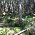 13:29 コケが多い森