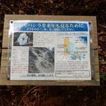 シモバシラの説明板