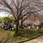 西郷山公園はあふれかえるほどの花見客