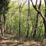 破線ルートは森林再生中でした