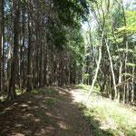 植林と原生林の境を歩く