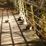 12:41 猫が橋でお昼ね