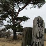 11:46 山頂にある立派な松の木。