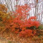 9:40 ゲレンデないは紅葉真っ盛り