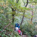意外と急登のぶな林を登る