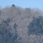 山頂の白いのは枯れ枝