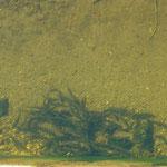 川には魚が群がっていた