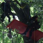Übernachtung im Baum