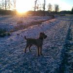 Jack genießt die Wintertage.