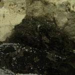 Halophryne trispinosus, Löwensteinfisch