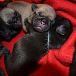 Bella,Beauty und Bruce 4 Tage alt