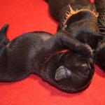 Balu und Bärbel mit 4 Tagen