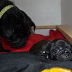 Gin und Bruno 2 Wochen alt