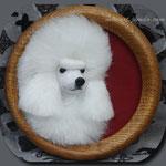 Пудель\Poodle