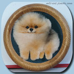 Померанский шпиц\Pomeranian