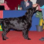 Club Show, Burgdorf, 15.4.2012 Zwischenklasse, sg
