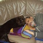 Stella und Heinz beim Mittagsschläfchen