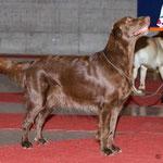 19.2.2011 Exposition Canine Internationale Fribourg, Gebrauchshundeklasse V1 CAC/CACIB -> nun ist Kiri Schweizer Schönheitschampion