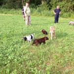 spielen mit den anderen Jagdhunden