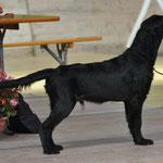 L'Expo 3 Lacs, Avenches, 11.9.10, VV1 Best Puppy Mâle