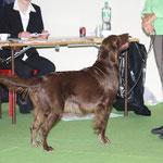 Exposition Canine Internationale Lausanne, 17.10.2010, Gebrauchshundeklasse V 1 CAC & Res.CACIB