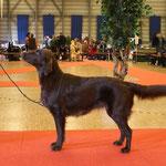 Exposition Canine International Fribourg, 21.2.2009, V 4