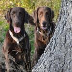 Brownie & Kiri