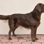 Exposition Canine Internationale Fribourg, 28.2.10, Gebrauchshundeklasse V2 resCAC