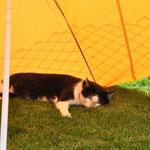 31.7.2014 Mäxxli geniesst die Sonne im Welpengarten