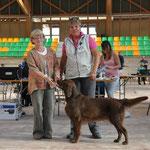 Expo La Romandie, Avenches, 25.9.2011, Gebrauchshundeklasse V1 CAC BEST GUNDOG OF BREED