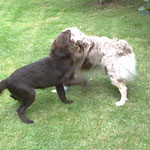 Stella mit Kollege Rusty