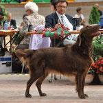 La Romandie, Avenches, 23.9.2012, Workingclass, V1 CAC & Best Gundog of Breed