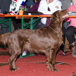 20.2.2011 Exposition Canine Internationale Fribourg, Gebrauchshundeklasse sg2