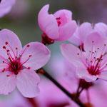 Frühlingserwachen, Larissa Harter
