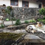 Hund und Katz, Annemarie Bührer