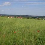 Blick auf Aichhalden-Rötenberg im Sommer, Ulrike Stoll