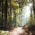 Es werde Licht (Ausritt bei Omersbach), Wolfram Reinhard