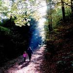Lichtspiele im Buchenwald bei Schiltach (2), Fynn Schröder