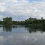 Blick aufs bewaldete Ufer vom Escher See, bedeckter Himmel (Foto: Anglersportgruppe Ford e. V. Köln)