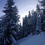 Verschneiter Wald im Fieschertal