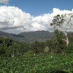 View from Sakharani Vineyards towards Usambara Mountains, Tanzania