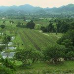 Landscape Hua Hin Hills Vineyards, Thailand