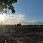 Sunset at the Trial Vineyard in Makutupora, Tanzania