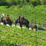 Elephant Riding Tour at Hua Hin Hills Vineyard, Thailand