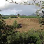 View of Vineyard at Sakharani, Tanzania