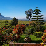 View of Myanmar Vineyards in the Background, Inle Lake, Myanmar