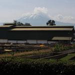 Besuch der Tchibo-Kaffeeplantage bei Moshi.