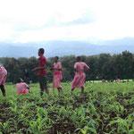 Bilder von einem Arbeitseinsatz auf den schuleigenen Feldern.
