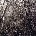 """DYLAN VON GUNTEN, Sin título 1, plata/gelatina, 16x20"""", 1996."""
